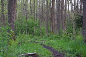 Bialowieza_Trail