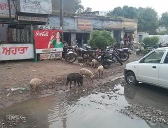 Amritsar Fieber