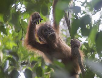 Bukit Lawang – alles was Du für Deinen Dschungeltrek wissen musst